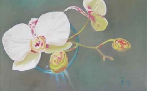 Orchidee 05